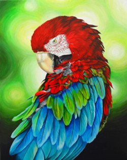 BirdOfColor