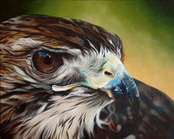 Portrait of The Red Tail