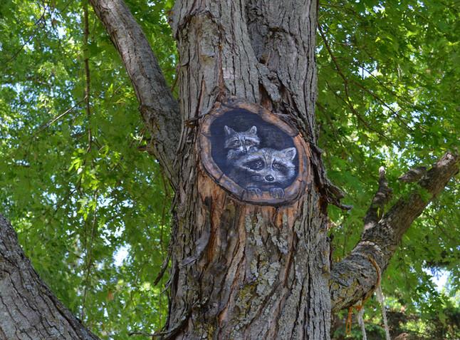 racoon tree mural3.jpg