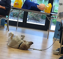 Quizzy the guide dog enjoying the epilep