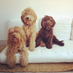 Instagram - Lupe, Alf y Cleo