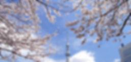 Sumida Park 2.jpg