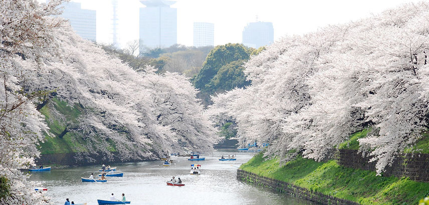 Ueno-Park-Boat-Trip-During-Cherry-Blosso