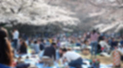 Yoyogi Park 3 Hanami - _Fiftyby30.jpg