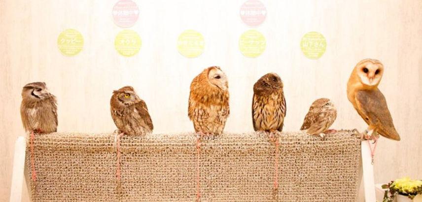 AKIBA-FUKUROU-owl-cafe-tokyo-must-do-add