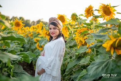 צילומי הריון  בחמניות