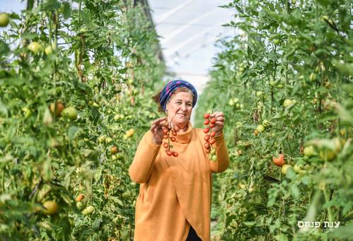 צילומיי תדמית לעצמאיים חקלאי