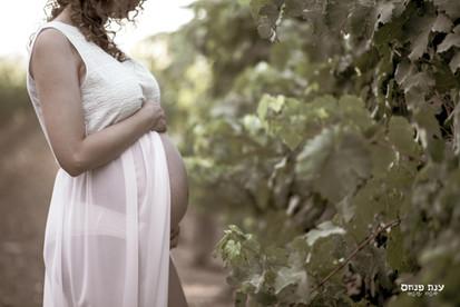 צילומי הריון בכרם ובטבע