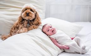 צילומי תינוקות וחיות מחמד