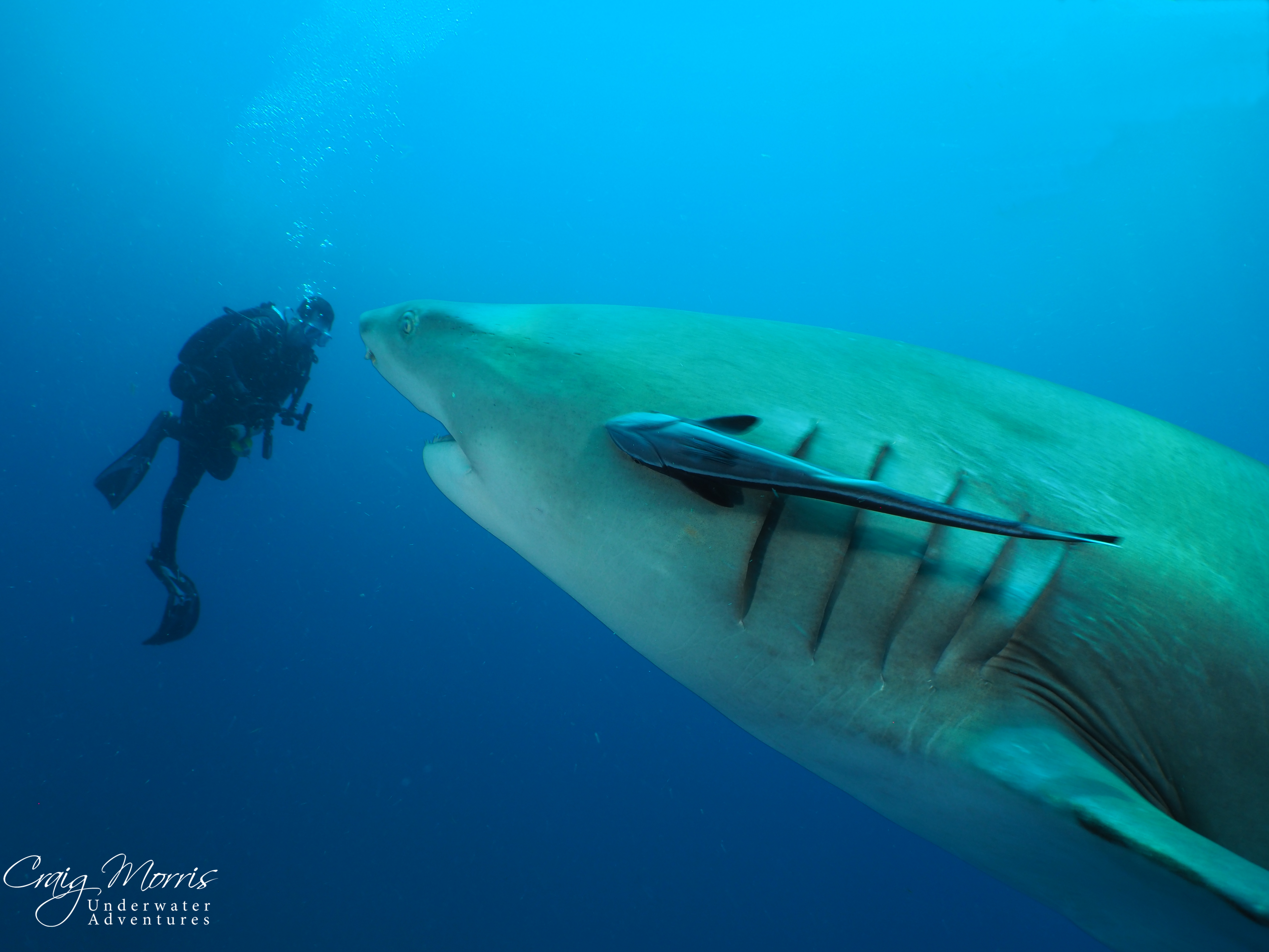 Bull Shark up close and personal