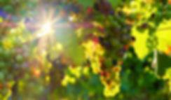 grapes-3550729_1280 (1).jpg