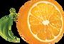 orange_PNG769.png