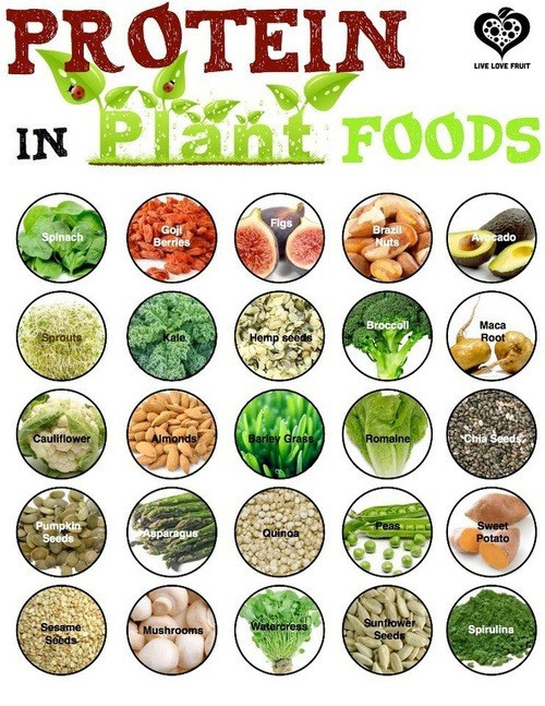 Protein in Plants