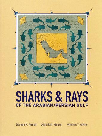Shark & Rays