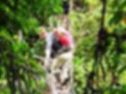 Baliem valley | Papua Trips | Wamena