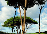 BARATTI toscane.jpg