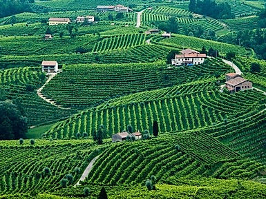 Valdobbiadene-italy-processo-vinyards-cr