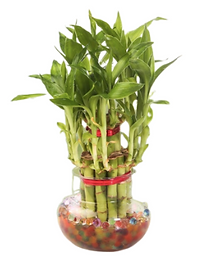 getgreen_plants_2 layer bamboo.png
