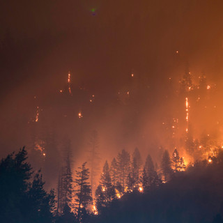 SIFCo RELEASES NEW VIDEO ABOUT COMMUNITY WILDFIRE PROTECTION, 2021