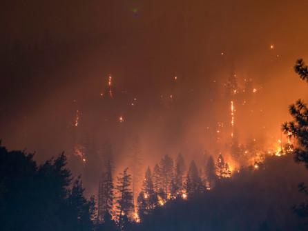 Incendi, chiesto lo stato di mobilitazione del servizio nazionale di protezione civile