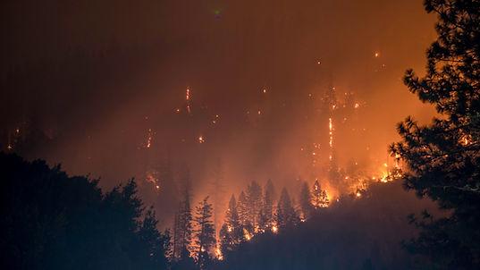 Photo d'un incendie de forêt.