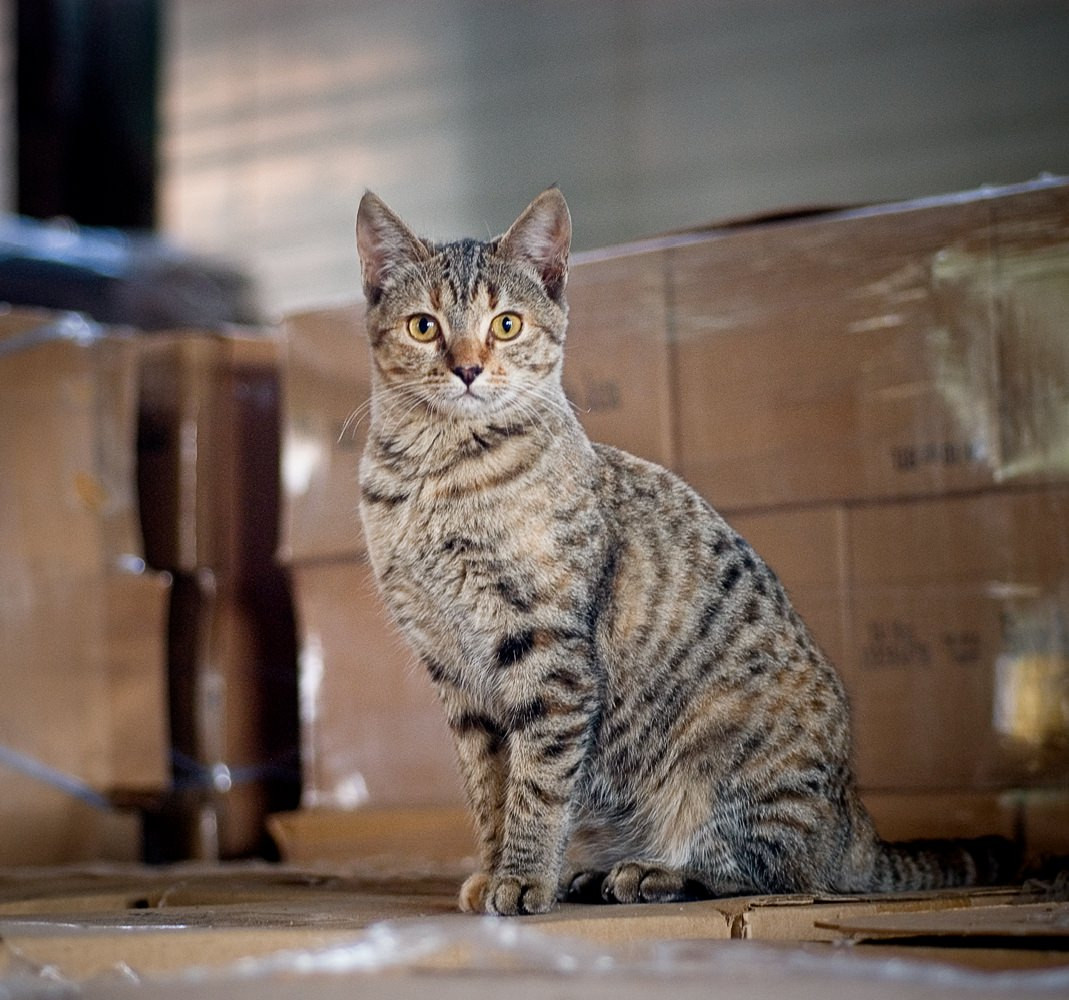 Warehouse-Cat.jpg