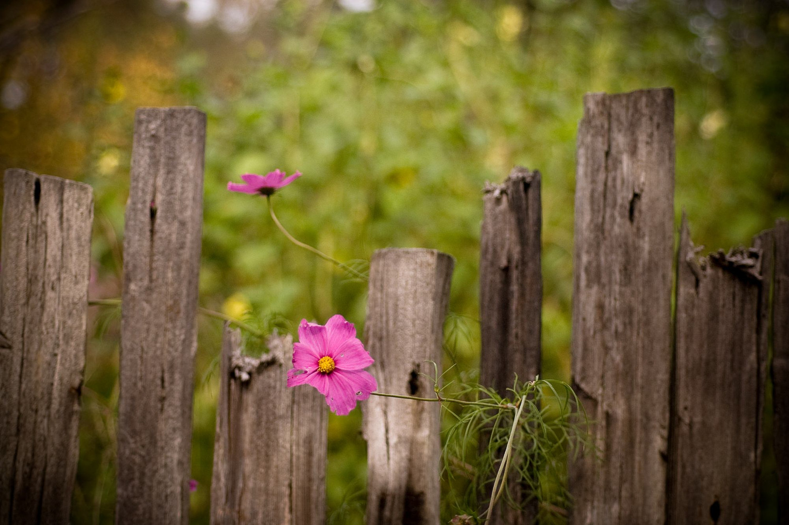 Flower-and-Fence.jpg