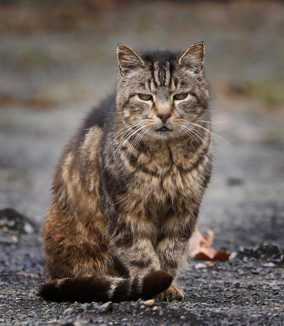 Street-Cat-2.jpg