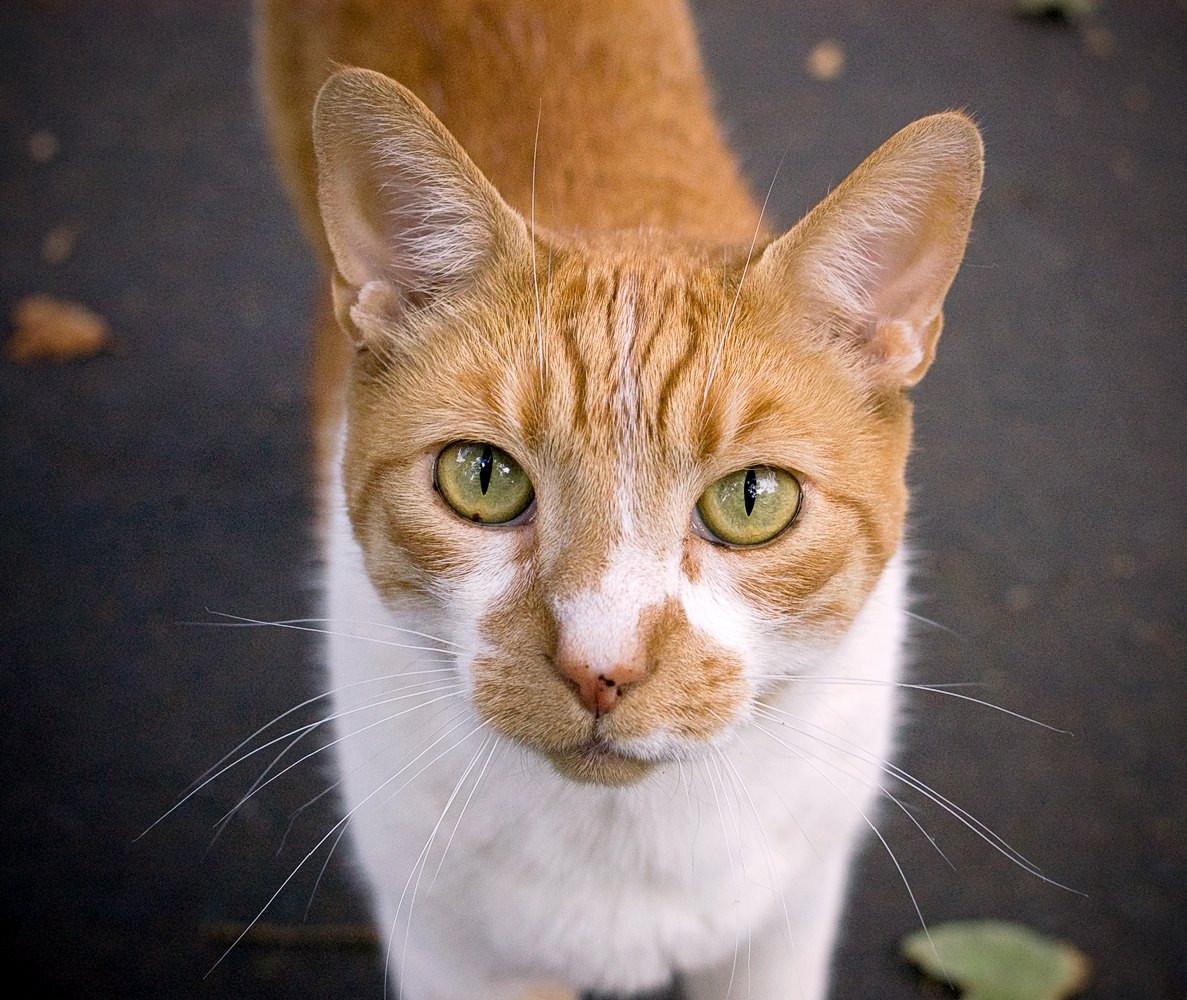 Spyglass-Cat.jpg