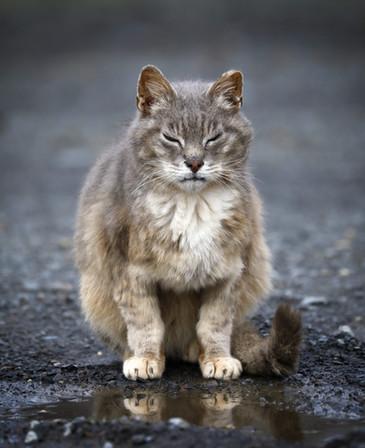 Street-Cat copy 2.jpg