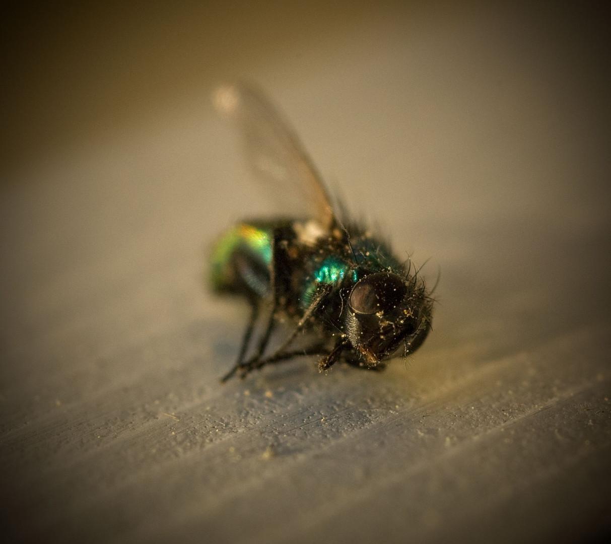 Green-Jacket.jpg