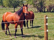 Wilmington, North Carolina-Equine electrical fence