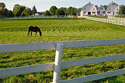 Wilmington North Carolina-Horse farm