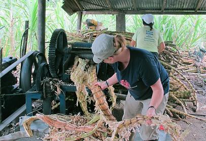 cultural exchange, sugar cane, amazon, ecuador