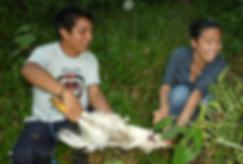 community life, Ecuadorian Amazon, internship, Pachaysana