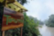 Tiputini Biodiversity Station, Yasuni, Kelly Swing