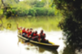rainforest, biodiversity, tiputini, study abroad, excursion