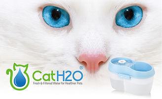 מזרקת מים לחתול.jpg