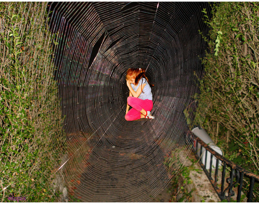 caught in spider web-1.jpg