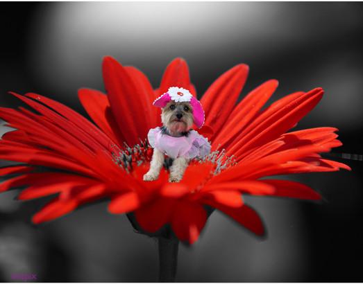 Lilly in daisy-1.jpg