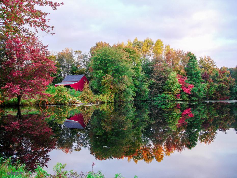 red on pond-1.JPG