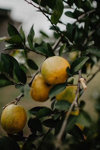 Lemon Essential Oil 5ml//15ml//30ml