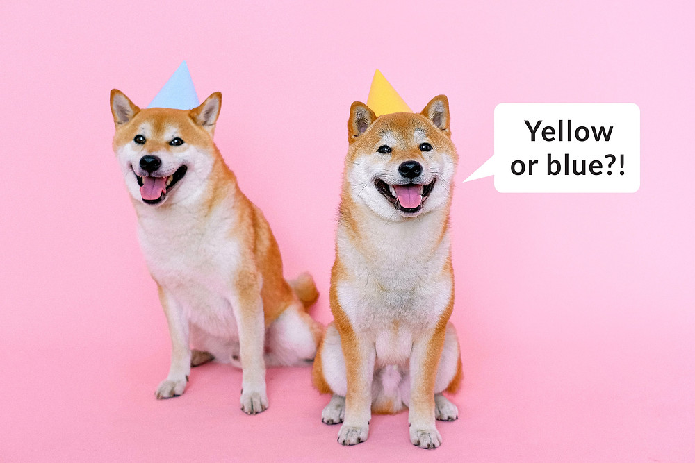 Corgi looking at a great business website