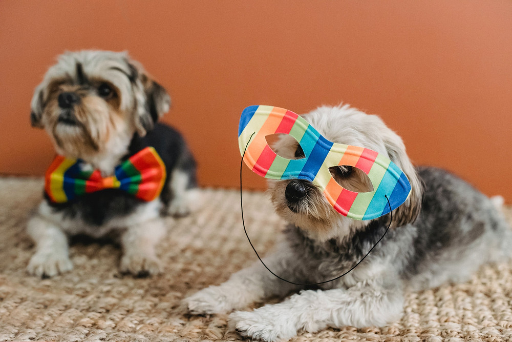 dogs dressed up with their own brand of style