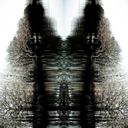 Reflection © Ludovic Bourgeois