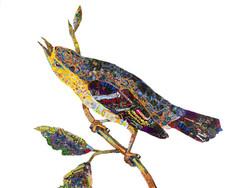 """""""Blue Mountain Warbler"""""""