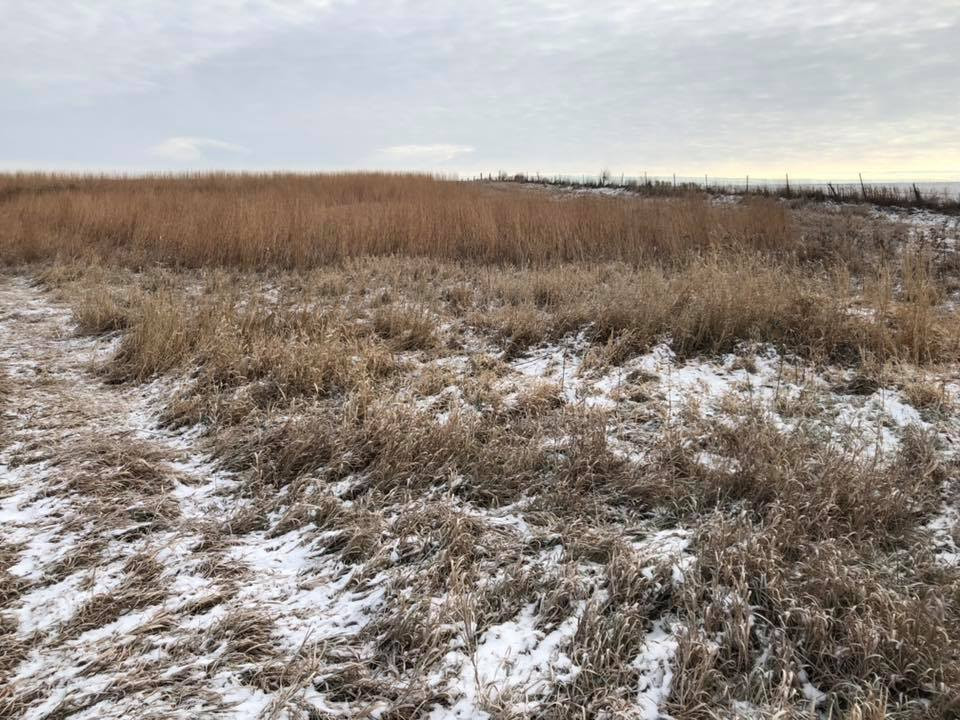 CRP plot put in place by local farmer with the help of Mahaska SWCD.