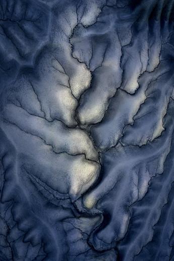 Fossile tree  (website).jpg