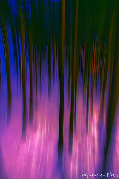 Luxury Fine Art Prints - PIENK FOREST BLUR