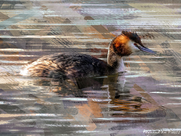 Bird painting canvas print - GREAT CRESTED GREBE